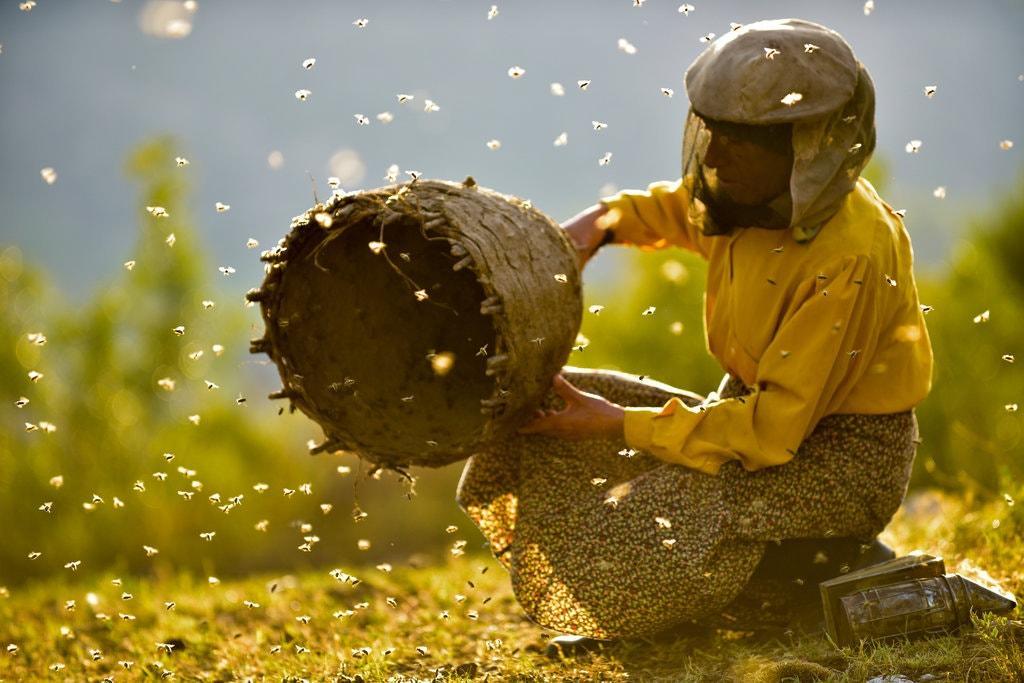Земята на дивите пчели